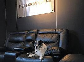 Photo #1: The Furry Guys - Pet Sitting