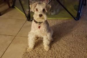 Photo #1: Amy's Dog Walking