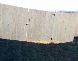 Photo #16: Martin's professional fence installatios and Repairs