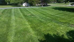 Photo #2: Martinez Lawn care and Handy man work