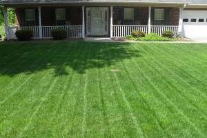 Photo #1: Martinez Lawn care and Handy man work