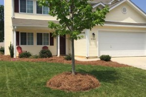 Photo #2: DeShon & Sons Lawn Care Accepting New Clients For 2016