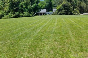Photo #4: Beamon's Professional Lawn Care
