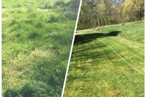 Photo #2: Beamon's Professional Lawn Care