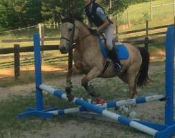 Photo #5: Autumn Sun Stables. Horseback Riding Lessons