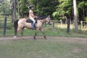 Photo #11: Autumn Sun Stables. Horseback Riding Lessons