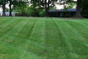 Photo #5: Roosters Landscaping and LawnCare Services