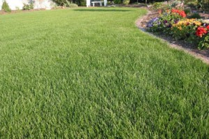 Photo #2: Atlas property services. Lawn care, landscaping, pressure washing...