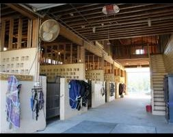 Photo #7: Horse Boarding Summer Specials! Freedom Hill Stables