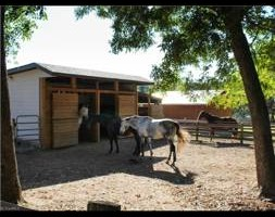 Photo #2: Horse Boarding Summer Specials! Freedom Hill Stables