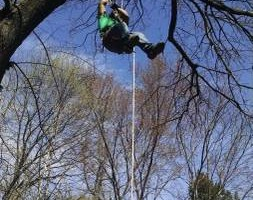 Photo #3: MICHAELS LAWN & TREE SERVICES