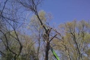 Photo #2: MICHAELS LAWN & TREE SERVICES