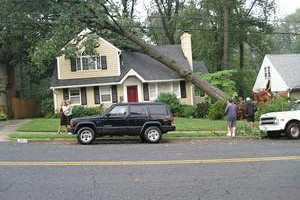 Photo #1: MICHAELS LAWN & TREE SERVICES