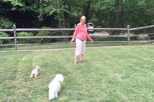Photo #1: Small Dog Boarding in Experienced, Loving Home
