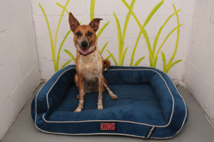 Photo #1: Indy.Hound. Daycare full ($25) or half day ($15)