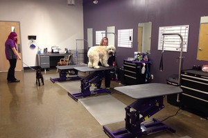 Photo #1: Furr Pet Spa and Wellness