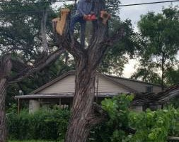 Photo #1: TWO DUDES TREE TRIMMING SERVICE