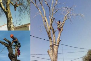 Photo #4: Insured Arborists. Affordable Tree Care