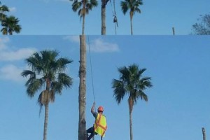 Photo #3: Insured Arborists. Affordable Tree Care