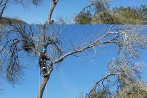 Photo #2: Insured Arborists. Affordable Tree Care