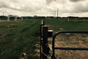 Photo #8: Ranch/Farm Fencing