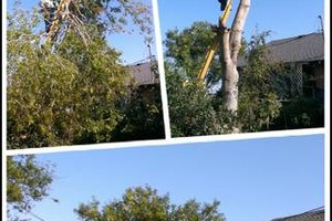 Photo #2: Yard care and tree trimming
