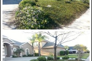 Photo #1: Yard care and tree trimming