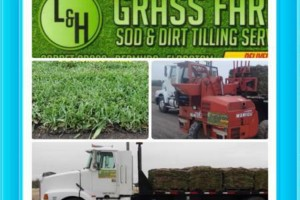 Photo #2: L&H GRASS FARMS 100% CLEAN NO MIX GREEN GUARANTEED...