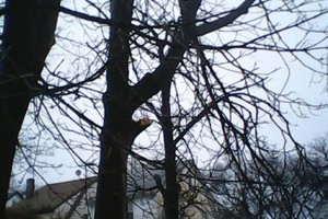 Photo #1: Tree Works Tree Trimmings &Removal Services, Lowest price