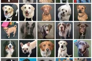 Photo #1: Bandilane Dog Daycare, Home pet sitting, Grooming & Training