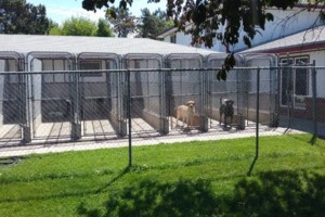 Photo #3: Wilderness Kennels. Dog Boarding and Training