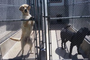 Photo #2: Wilderness Kennels. Dog Boarding and Training