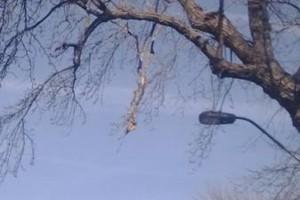 Photo #3: Tree Service.  25 years exp!
