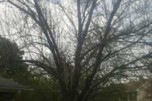 Photo #2: Tree Service.  25 years exp!