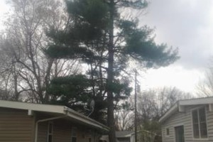 Photo #1: Tree Service.  25 years exp!