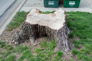 Photo #11: Stump Grinding - Omaha Stump Grinding & Landscape Service