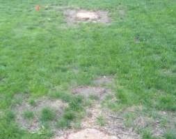 Photo #10: Stump Grinding - Omaha Stump Grinding & Landscape Service