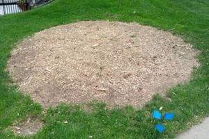 Photo #9: Stump Grinding - Omaha Stump Grinding & Landscape Service