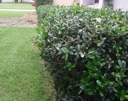 Photo #1: Angel Lawn Services