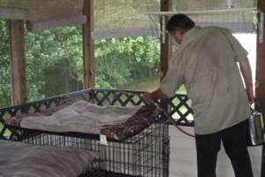 Photo #7: Safari Pest Control, LLC