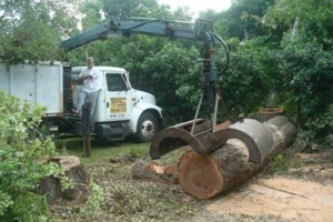 Photo #1: ABE's Tree Care and Stump Grinding