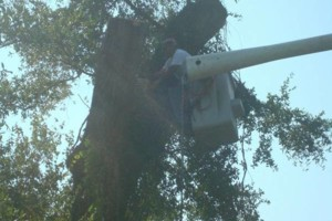 Photo #2: ABE's Tree Care and Stump Grinding