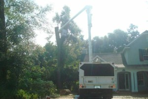 Photo #3: ABE's Tree Care and Stump Grinding