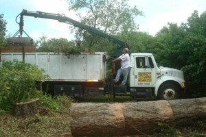 Photo #4: ABE's Tree Care and Stump Grinding