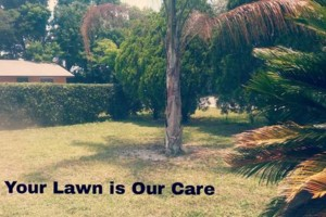 Photo #2: Your Lawn Our Care. Bi weekly cuts $20.00 -$40.00