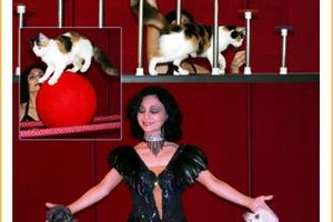 Photo #2: Dogs & Cats Show + Sound Equipment