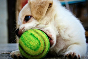 Photo #1: Central Pet Tucson. Doggy Daycare