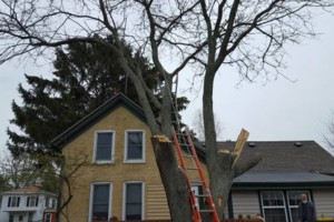 Photo #3: ROSE'S SERVICE AND TREE REMOVAL