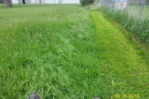 Photo #18: DRC - residential and small business Lawn Care