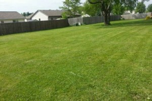 Photo #15: DRC - residential and small business Lawn Care